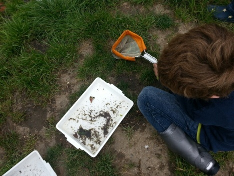 Looking at the invertebrates in the Quaggy.