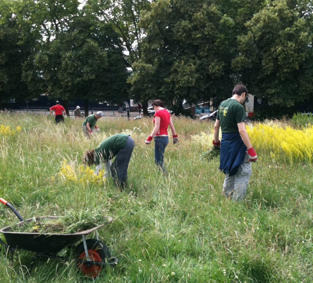 Nature's Gym volunteers working on Hilly Fields