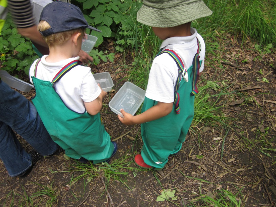 Looking for bugs in Grove Park