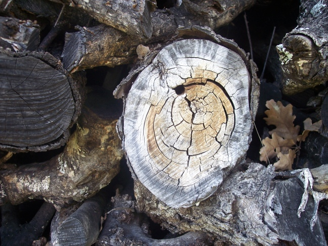 A dead wood pile is great for invertebrates