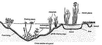 Create your own garden pond