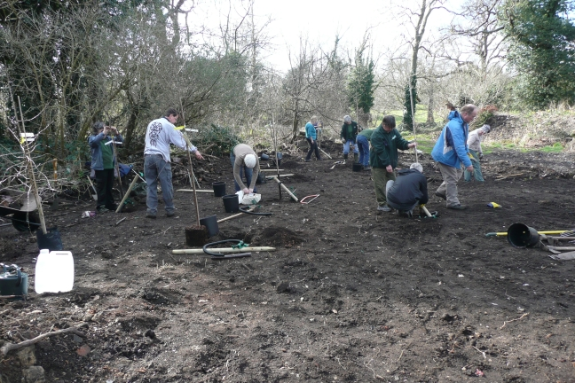 Overview of the planting site