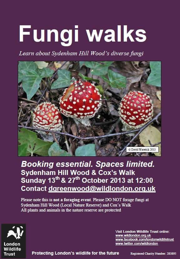 Fungi Walks at Sydenham Hill Woods