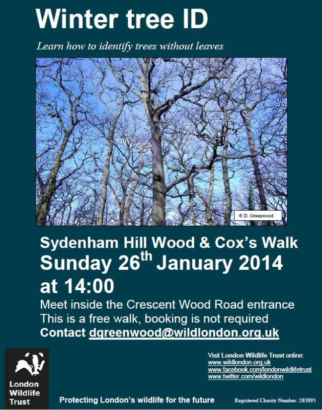 Join LWT and learn how to ID trees without their leaves