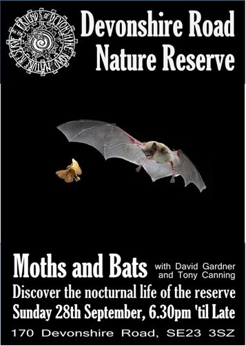 bat and moth night