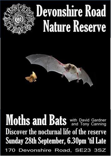 bat and moth night