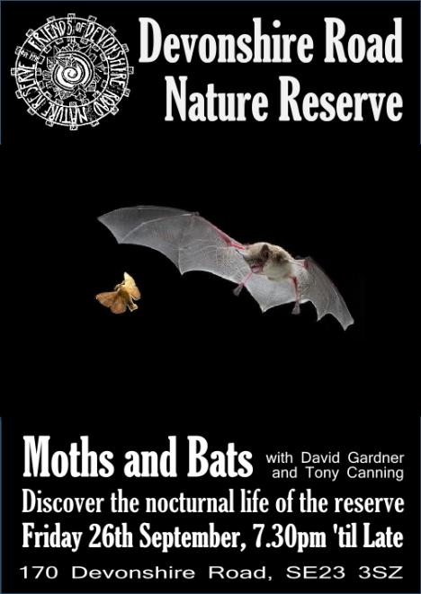 Moths and Bats Sept 26th 2014