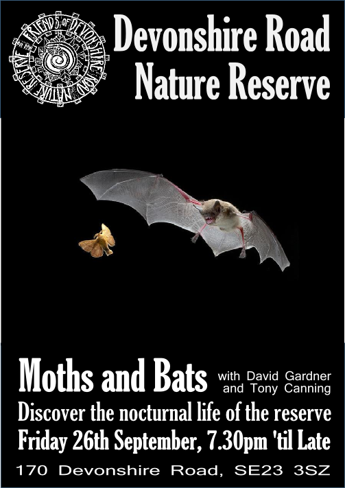 Moths and Bats Sept 26th 2014