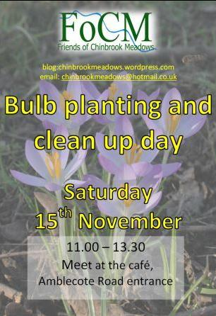 Chinbrook bulb nov14