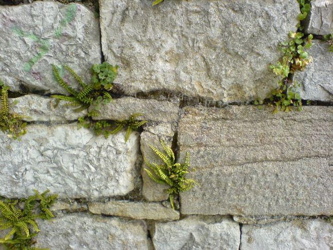 wall ©FreeImages.com