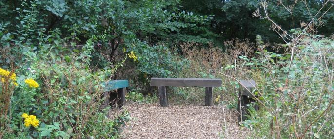 Bellenden Road Nature Garden