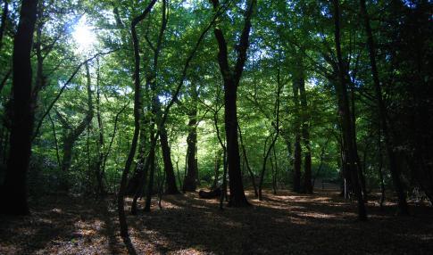 Sydenham Hill and Dulwich Woods (Daniel Greenwood)
