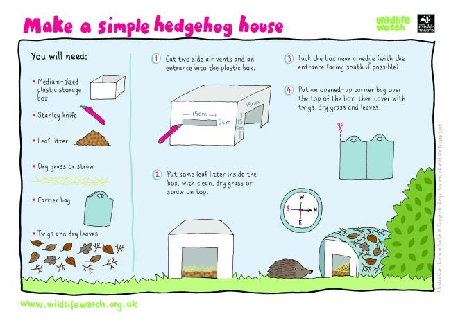 Create a home for hedgehogs