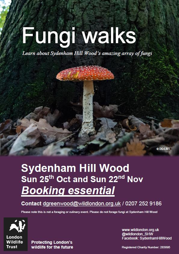 Fungi walks with London Wildlife Trust