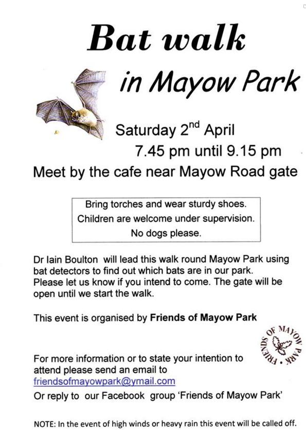 Bat walk in Mayow Walk