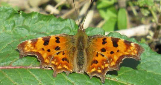 Comma ©John Walsh