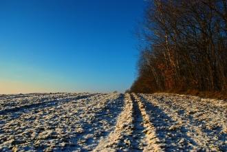 Winter Field © FreeImages St Mattox