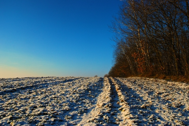 Winter Field © FreeImages St Mattox