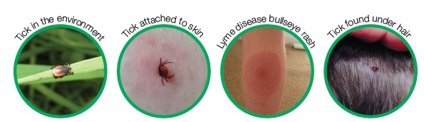 Be Tick aware © Public Health England